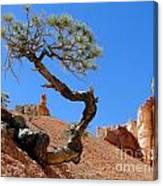 Gnarled Pine In Bryce Canyon Utah Canvas Print