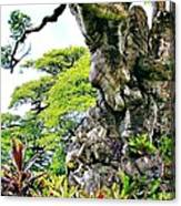 Gnarled Tree  Canvas Print