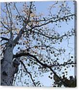 Go Climb A Tree Canvas Print