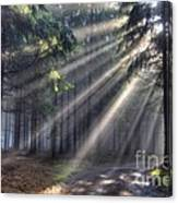 God Beams - Coniferous Forest In Fog Canvas Print
