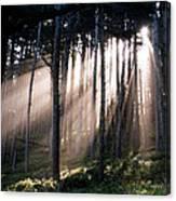 God Light Canvas Print