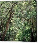 God's Canopy Canvas Print