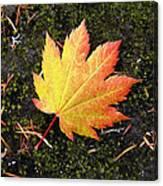 God's Perfect Leaf Canvas Print
