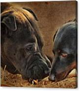 Going Nose To Nose Canvas Print