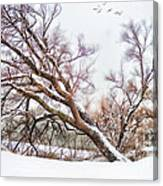 Going Softly Into Winter Canvas Print