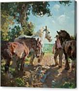 Going To Pasture Canvas Print