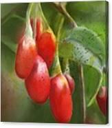 Gojo Berries Canvas Print