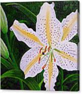 Gold Band Lily Canvas Print