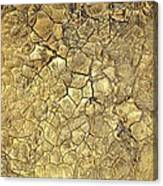 Gold Fever 1 Canvas Print