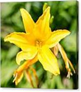 Gold Flower Canvas Print