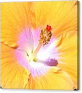 Gold Hibiscus Canvas Print
