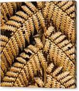 Gold Leaf Fern Canvas Print
