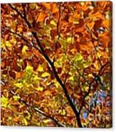 Gold Leaves Of Autumn Canvas Print
