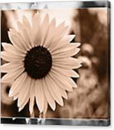 Gold Tone Sunflower Canvas Print