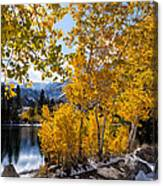 Golden Aspen On The Lake Canvas Print