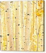 Golden Aspens Utah Canvas Print