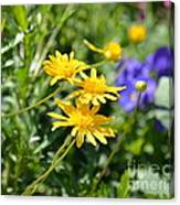 Golden Aster Canvas Print