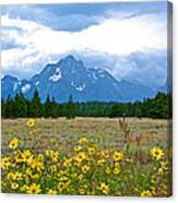 Golden Asters And Tetons From The Road In Grand Teton National Park-wyoming Canvas Print