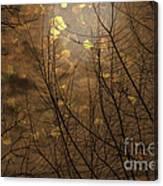 Golden Autumn Abstract Sky Canvas Print
