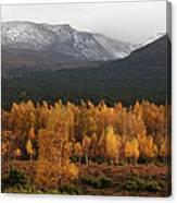 Golden Autumn - Cairngorm Mountains Canvas Print