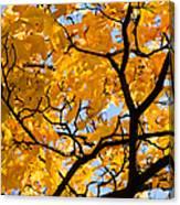Golden Autumn - Featured 3 Canvas Print