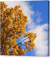 Golden Autumn Leaves And Blue Sky Canvas Print