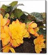 Golden Beauty Canvas Print