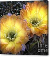 Golden Cactus Flowers  Canvas Print