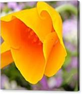 Golden California Poppy Canvas Print