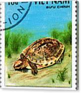 Golden Coin Turtle Cuora Trifa Canvas Print