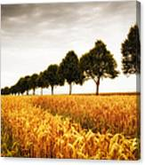 Golden Cornfield And Row Of Trees Canvas Print