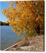Golden Cottonwoods Canvas Print