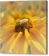 Golden Crown - Rudbeckia Flower Canvas Print