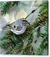 Golden-crowned Kinglet Canvas Print
