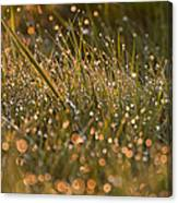 Golden Dew Drops Canvas Print