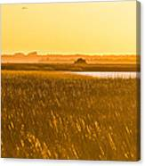 Golden End Of Day  Canvas Print