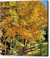 Golden Fenceline Canvas Print