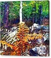 Golden Ferns Canvas Print