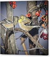 Golden Finch Cold Shoulder Canvas Print