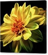 Golden Flower  Canvas Print