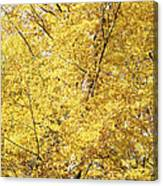 Golden Foliage Canvas Print