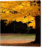 Golden Glow Of Autumn Fall Colors Canvas Print