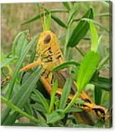 Golden Grasshopper Canvas Print