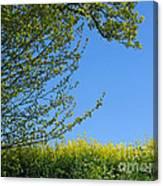 Golden Growing Season Canvas Print