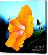 Golden Hibiscus Canvas Print