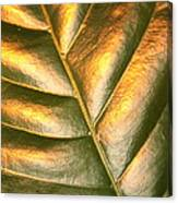 Golden Leaf 2 Canvas Print