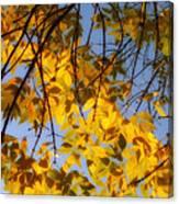 Golden Leaf Cascade Canvas Print