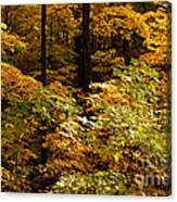 Golden Leaves In Autumn Canvas Print