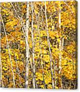 Golden Leaves In Autumn Abstract Canvas Print