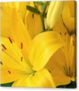 Golden Lilies Canvas Print